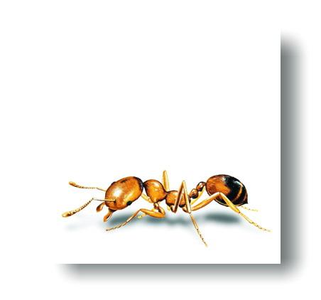 aab162bf8 Solárny odpudzovač mravcov [188] - 35.29€ : repeller.eu